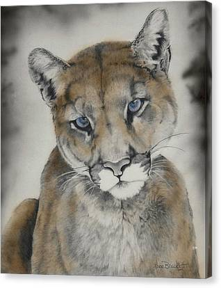 Blue Eyes Canvas Print by Lori Brackett