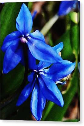 Blue Floral Canvas Print by David Lane