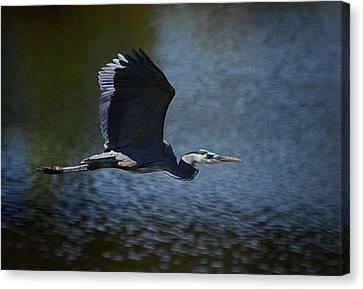 Blue Heron Skies  Canvas Print by Saija  Lehtonen