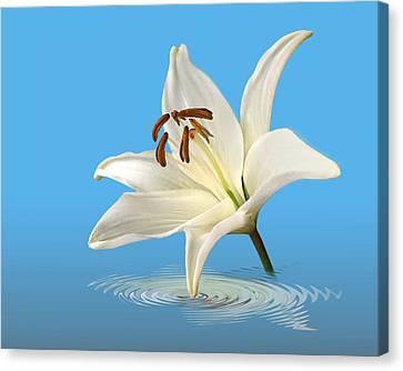 Blue Horizons - White Lily Canvas Print by Gill Billington