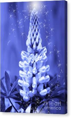 Blue Magic Sparkle Lupine  Canvas Print by Cathy  Beharriell