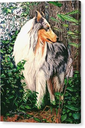 Blue Merle Collie Canvas Print by Karen Curley