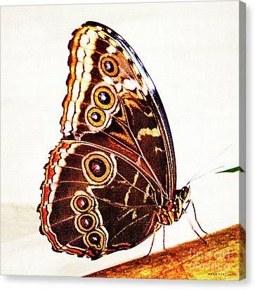 Blue Morpho Butterfly Canvas Print by Mona Stut