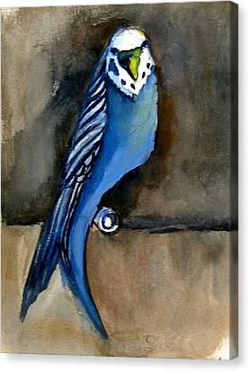 Blue Paraket Canvas Print by Mindy Newman