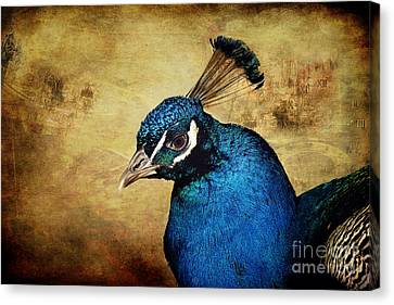 Blue Peacock Canvas Print by Angela Doelling AD DESIGN Photo and PhotoArt