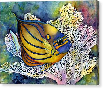 Blue Ring Angelfish Canvas Print by Hailey E Herrera