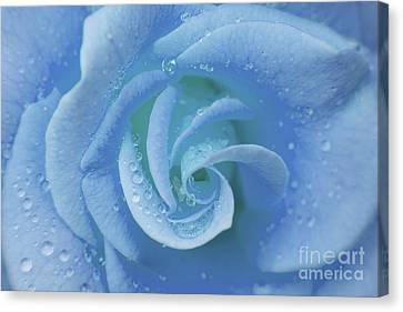 Blue Rose Canvas Print by Julia Hiebaum