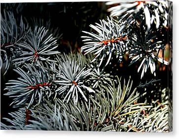 Blue Spruce Beauty Canvas Print by Hanne Lore Koehler