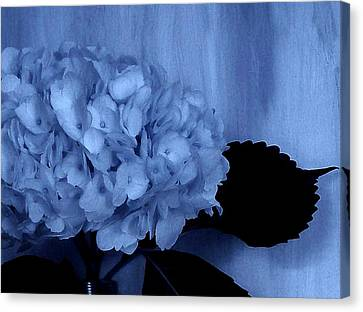 Blue Tint Hydrangea Canvas Print by Marsha Heiken