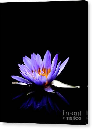 Blue Water Lily . 7d5714 Canvas Print by Wingsdomain Art and Photography