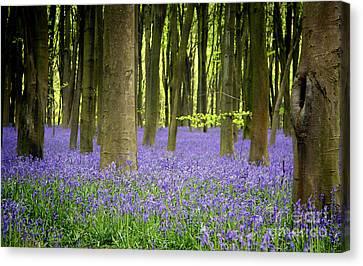 Bluebells Canvas Print by Jane Rix