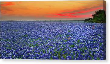 Bluebonnet Sunset Vista - Texas Landscape Canvas Print by Jon Holiday