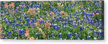 Bluebonnets And Paintbrushes Panorama - Texas Canvas Print by Brian Harig