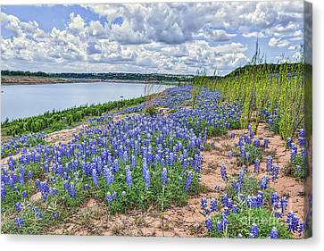 Bluebonnets On The Rivers Edge Canvas Print by Tod and Cynthia Grubbs
