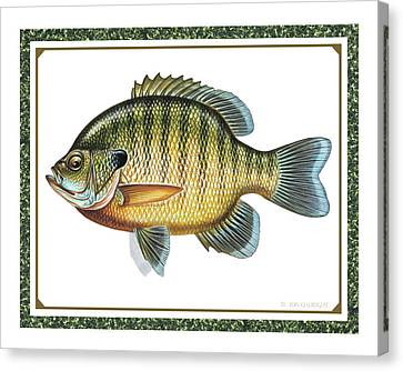 Bluegill Print Canvas Print by JQ Licensing