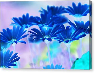 Bluemination Canvas Print by Robin Webster