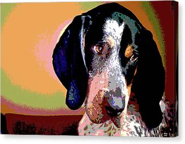 Bluetick Coonhound Canvas Print by Charles Shoup