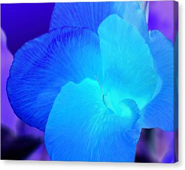 Blurple Flower Canvas Print by James Granberry
