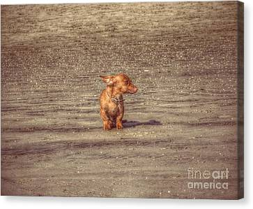 Bob The Boss Canvas Print by Leah McPhail