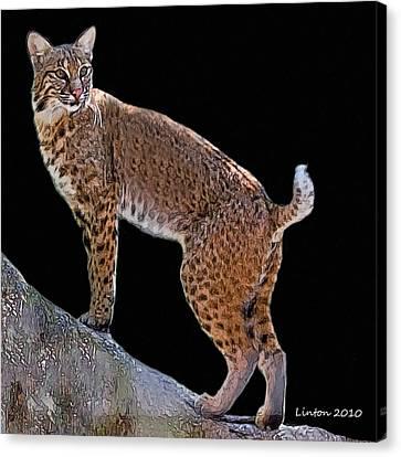 Bobcat 2 Canvas Print by Larry Linton