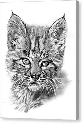 Bobcat Kitten Canvas Print by Reed Palmer