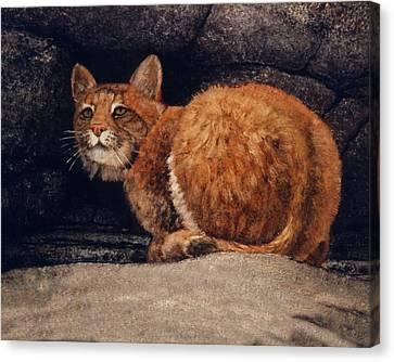 Bobcat On Ledge Canvas Print by Frank Wilson