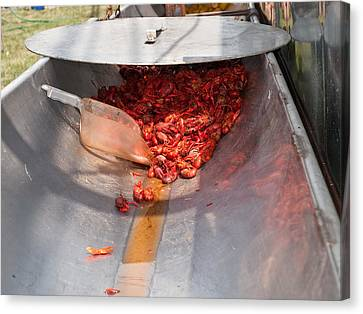 Boiled Crawfish Canvas Print by Jim DeLillo