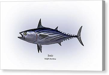 Bonito  Canvas Print by Ralph Martens