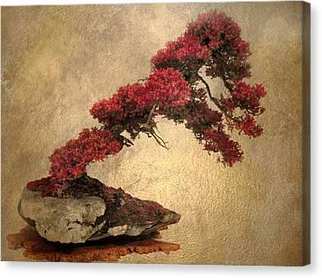 Bonsai Display Canvas Print by Jessica Jenney