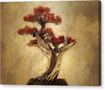 Bonsai Pine Canvas Print by Jessica Jenney