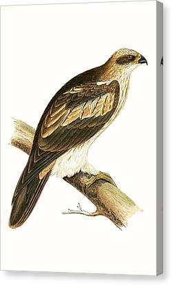 Booted Eagle Canvas Print by English School