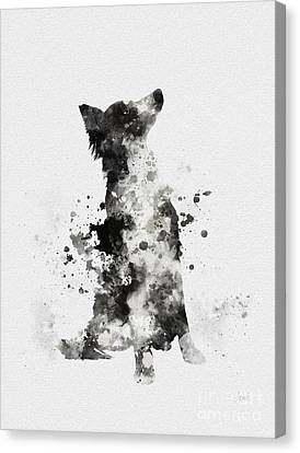 Border Collie Canvas Print by Rebecca Jenkins