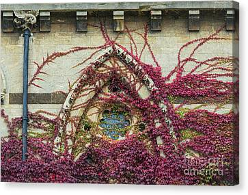 Boston Ivy At Christ Church College Canvas Print by Tim Gainey