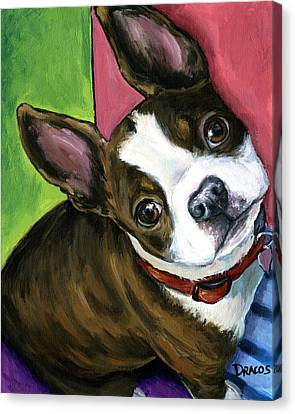 Boston Terrier Looking Up Canvas Print by Dottie Dracos