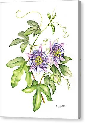 Botanical Illustration Passion Flower Canvas Print by Karla Beatty
