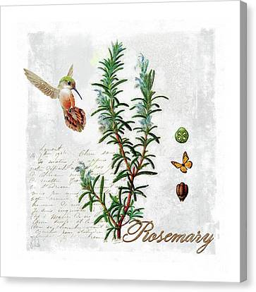 Botanical Illustration, Rosemary Herb Hummingbird Botany Canvas Print by Tina Lavoie