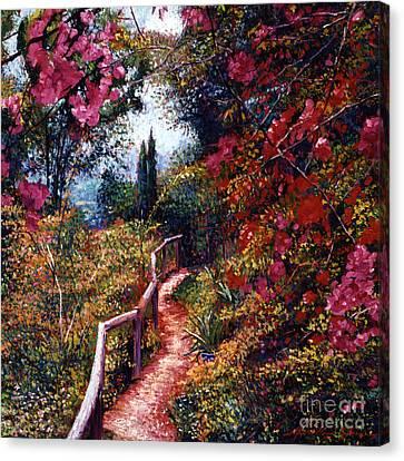 Bougainvillea Path Tuscany Canvas Print by David Lloyd Glover