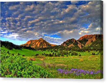 Boulder Spring Wildflowers Canvas Print by Scott Mahon