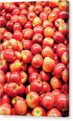 Bountiful Apples Canvas Print by Todd Klassy