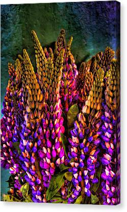 Bouquet Of Lupin Canvas Print by David Patterson
