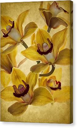 Bouquet Canvas Print by Rebecca Cozart