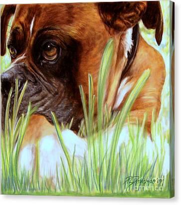 Boxer  Canvas Print by Patricia L Davidson
