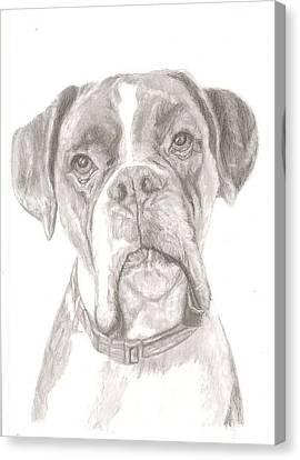 Boxer Canvas Print by Rebecca Vose