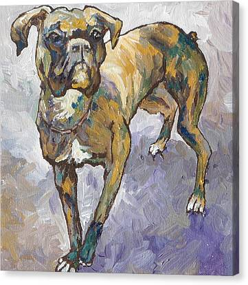 Boxer Canvas Print by Sandy Tracey