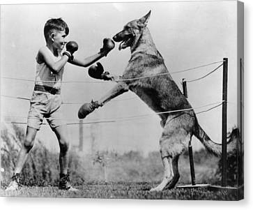 Boxing With Dog Canvas Print by Topical Press Agency