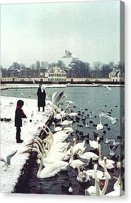 Boy Feeding Swans- Germany Canvas Print by Nancy Mueller