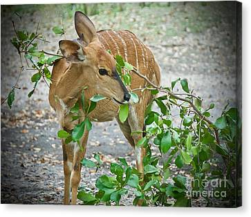 Branching Out Canvas Print by Judy Kay