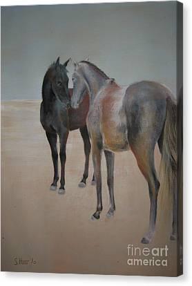 Brief Encounter Canvas Print by Sabina Haas