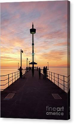 Brighton Jetty Sunset Canvas Print by Ray Warren