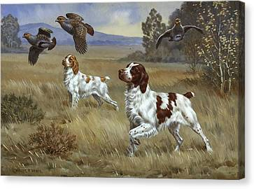Brittany Spaniels Flush Three Birds Canvas Print by Walter A. Weber
